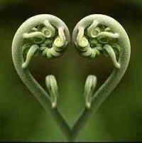 fiddleheads heart 250x250